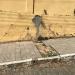 Vereador solicita reparo em calçada